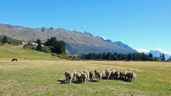 ODI Schüleraustausch Neuseeland Südinsel